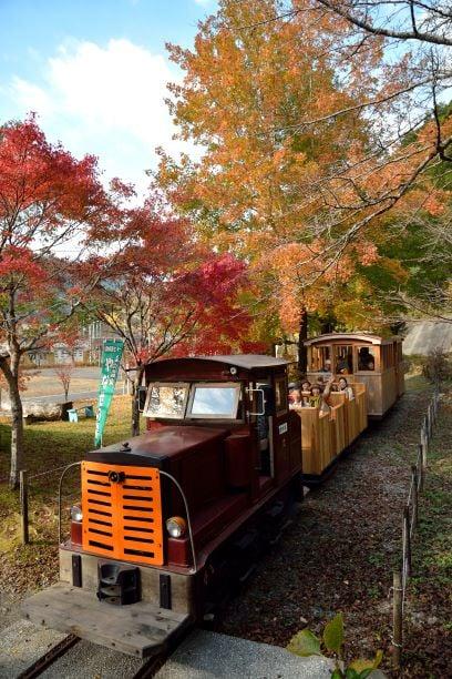 馬路森林鐵道,沿著西谷川周圍約300公尺被楓樹包圍著。(高知縣提供)