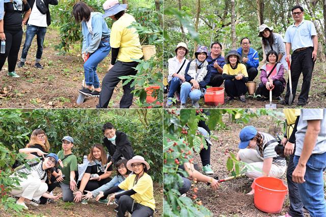 3組學員體驗咖啡樹種植、施肥等田間管理實作課程。(攝影/鄭池南)