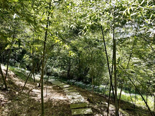 梅居休閒農場的孟宗竹林。(臺北市農會提供)