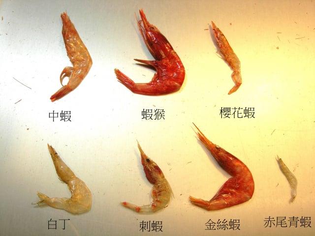 赤尾青蝦的蝦身長是櫻花蝦三分之一,顏色黃白色。