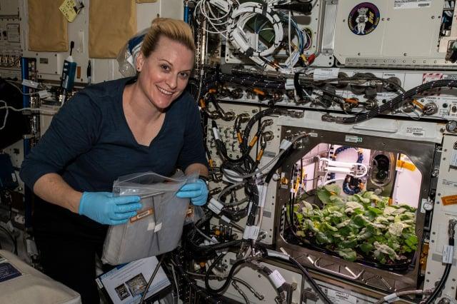 女太空人魯賓斯在太空站上採收第一批蘿蔔。(NASA)