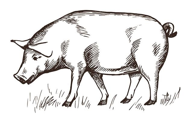 因造下惡業太多,死後將墮為豬身,經過三世轉生為豬的他獲得了人身。「長人手的豬」拍了一張照片,同時親作一短文〈人畜輪迴之鐵證〉勸善。此事件和照片被廣為傳播報導,轟動一時,成為人畜輪迴的佐證。(Fotolia)