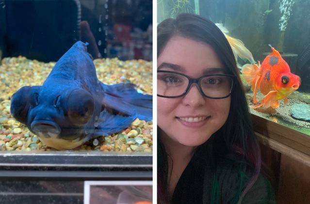 美國愛心女士萊西從一間寵物店買回一隻被棄養、奄奄一息的金魚,沒想到悉心照料一年之後,金魚不但存活下來,原本黑色的鱗片還蛻變成鮮豔的亮橘色。(萊西提供)