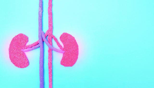 白蛋白為肝所製,肝腎同源,低白蛋白症的問題,從腎治肝。(123RF)