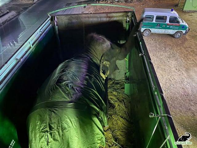 動物保護人士在跨年夜通過一輛專門設計的救護車趕去營救艾瑪。(Wildlife SOS提供)