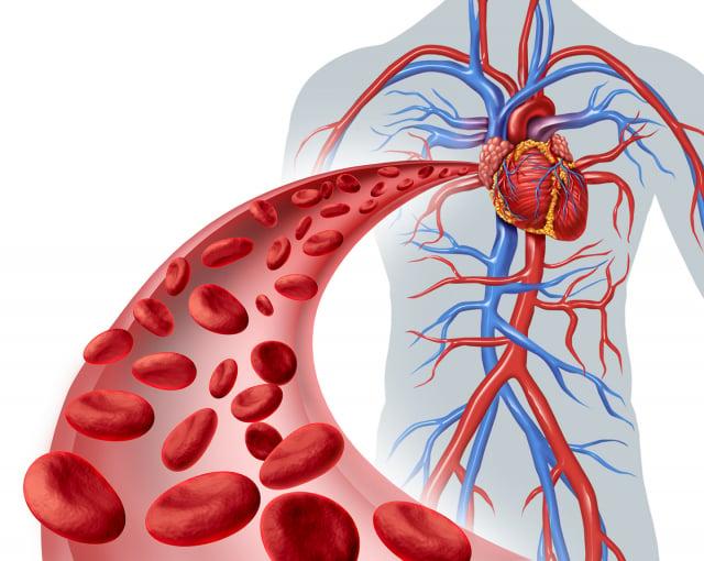 肌肉在連續地收縮和放鬆的同時,肌肉中大量的血管,也在連續地收縮與放鬆;在這樣的情況下,心臟和血管就會更加暢通,並促進血液循環,廢物也會更快地被排出。(Fotolia)