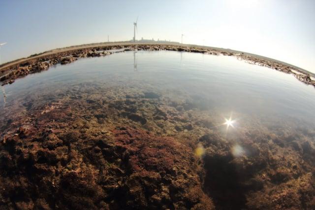 大潭藻礁生態豐富。