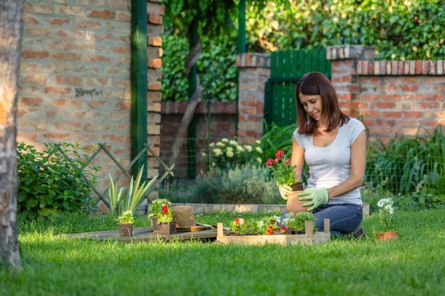從事園藝工作接近大自然,陶冶心情。(Shutterstock)