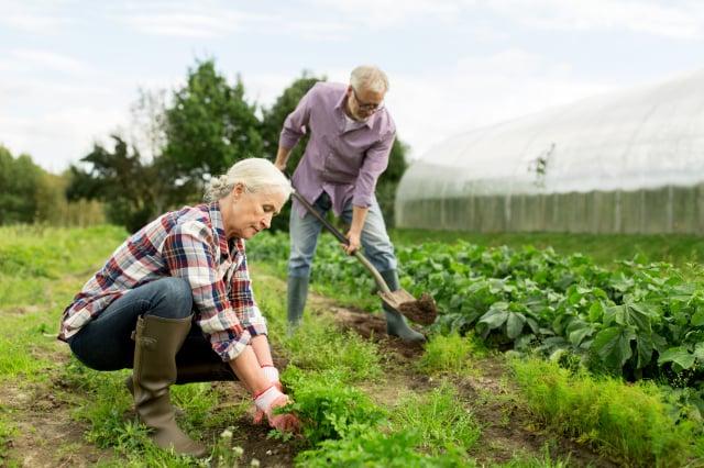 年長者從事園藝工作,可以活動筋骨,動手動腦,不容易有慢性疾病,減少罹患失智症的風險。(Shutterstock)