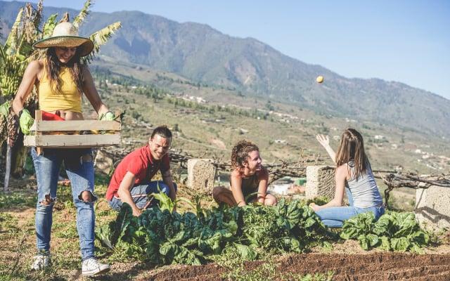 參與社區的園藝活動,能增進人與人之間的交流。不容易有孤獨感。(Shutterstock)