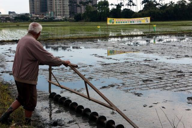 正條密植器游貽圳農友示範作業。