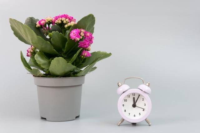 植物為自己設置鬧鐘示意圖。(Shutterstock)