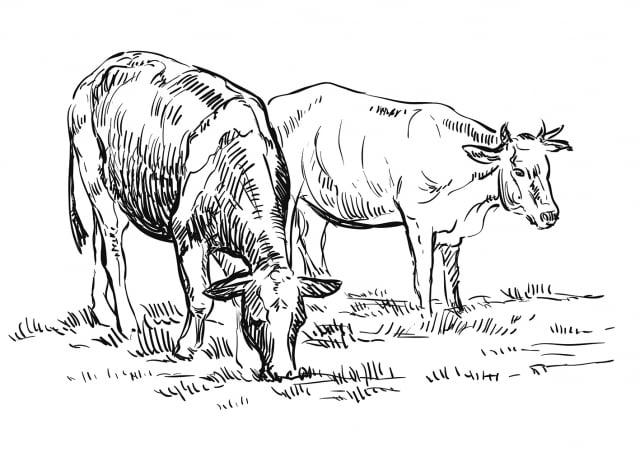 我從姊姊那裡知道了這頭白牛的「前生」,原來牠是輪迴轉世來報恩的。 (123RF)