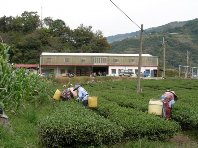 製茶機房。