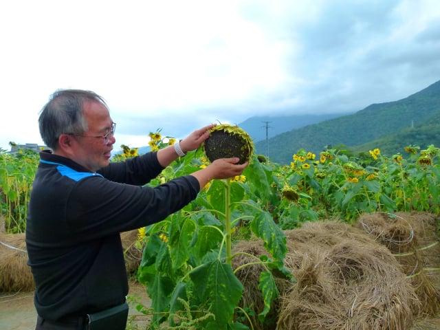 田野教學,讓民眾實際感受泥土裡生長的作物。