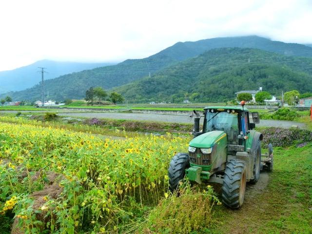田野教學讓民眾實際感受泥土裡生長的作物。