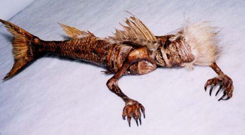 美人魚化石。(網路圖片)