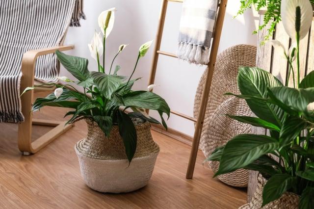 選擇適合植物大小的花盆。(Shutterstock)