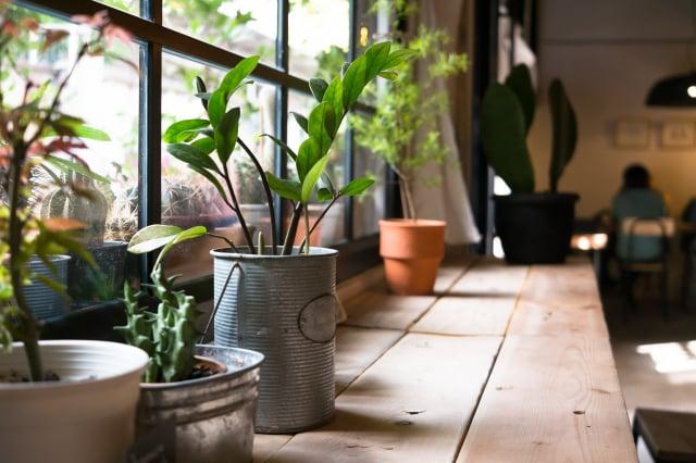各種漂亮的盆花擺放在家中,展現主人的生活情趣。(Shutterstock)