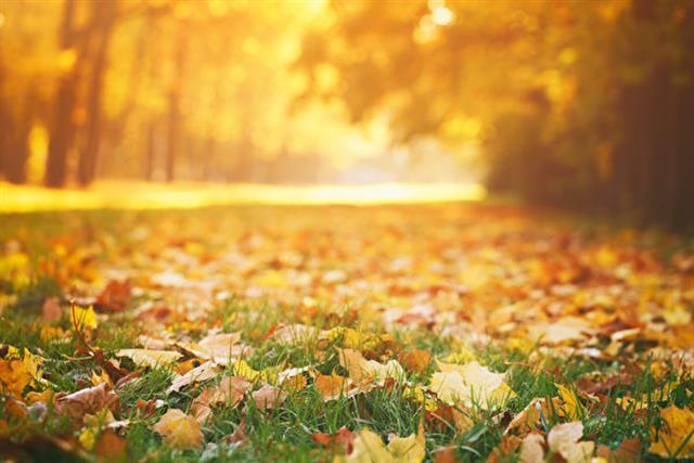 四季之中我最喜歡色彩斑斕的秋天與令人神往的秋韻,還有那秋風之中的一片片落葉。(Shutterstock)
