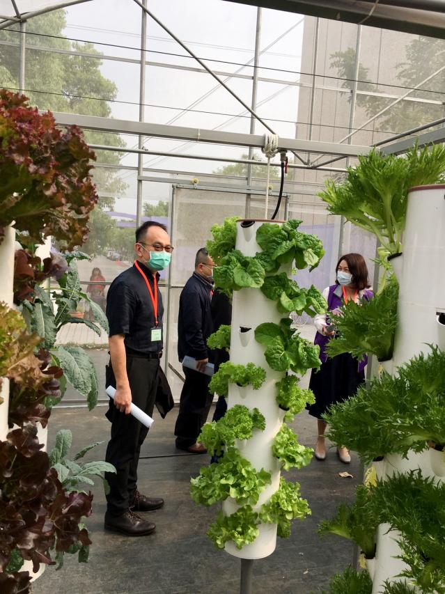 中區縣市醫師公會幹部參觀草療垂直水耕生菜設施。