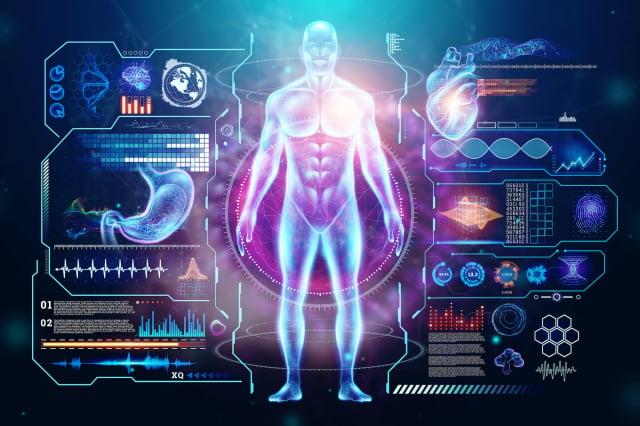 人體示意圖。(Shutterstock)