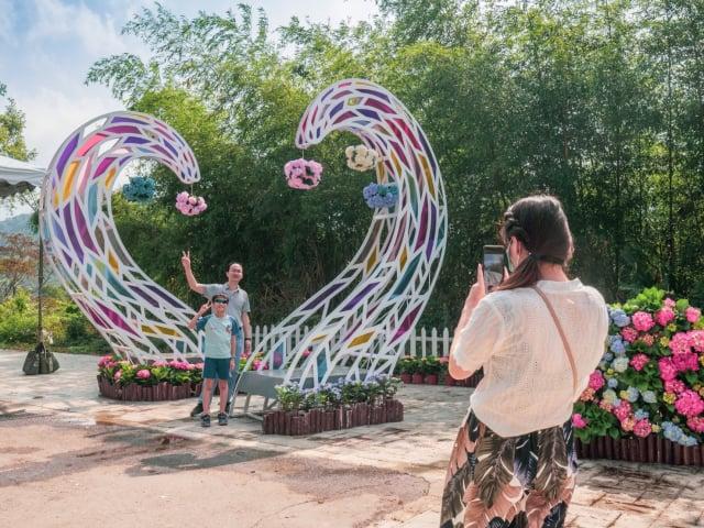 「2021桃園繡球花季」原訂展至6/19,受疫情影響,桃園市宣布13日提前結束。(桃園農業局提供)