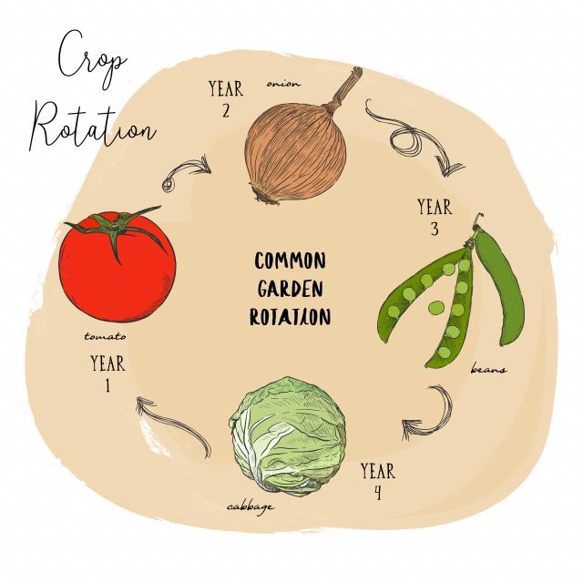 醫學雜誌《癌症預防研究》在2015年曾刊登一項研究顯示,洋蔥等蔥類蔬菜所含的有機硫化物,能減少胃腸道癌症的發生。(Fotolia)