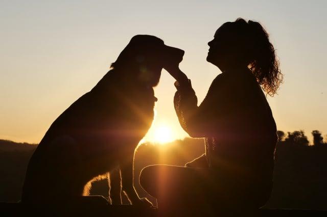 美國華盛頓州立大學的研究表明,摸摸小狗有助於紓解壓力。圖為一名女子在撫摸小狗。(Pixabay)