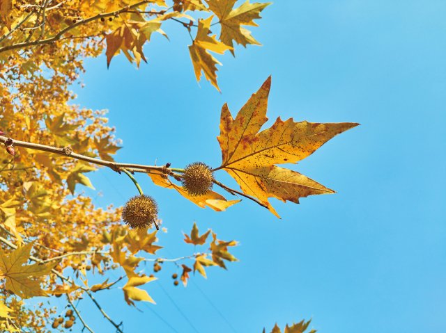 梧桐樹和鳳凰臺,有許多村裡人流傳下來的故事。(123RF)