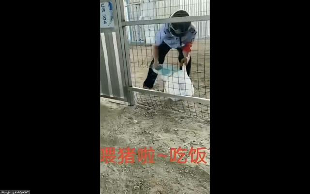 網傳影片稱,投遞給隔離者的食物像在餵豬。(網路影片擷圖)