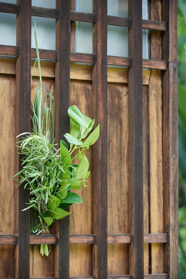 菖蒲艾草,概念都是取有芳香避邪的藥物。(Fotolia)