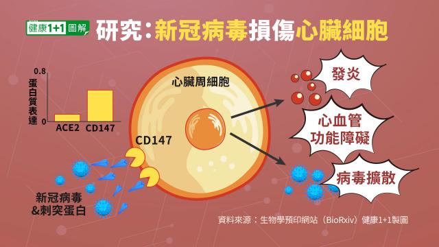 研究發現,新冠病毒和刺突蛋白本身,能夠損傷人的心臟細胞。(健康1+1/大紀元提供)