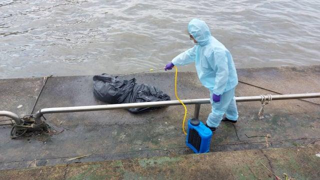 屏東縣動物防疫所23日在東港華僑市場乘船處附近海水中發現一隻黑色豬屍,初步排除非洲豬瘟感染。(屏東縣政府提供)