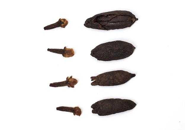 丁香比較:左邊為公丁香,右邊為母丁香,右上為去除外皮之丁香種子。(陳大真博士提供)