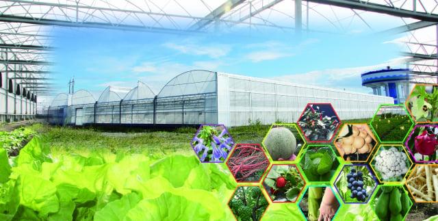 來自農場的新鮮蔬果。(活水源天癒農法蔬果食品提供)