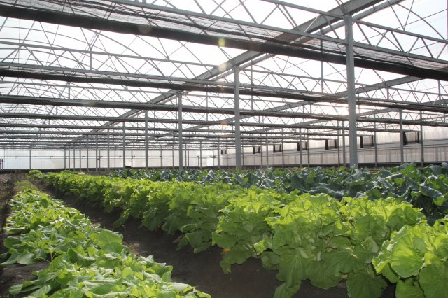 農場新鮮蔬菜。(活水源天癒農法蔬果食品提供)