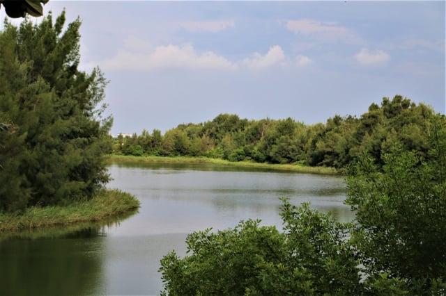 口湖鄉宜梧滯洪池,地層下陷區圈水成湖。(吳雁門提供)