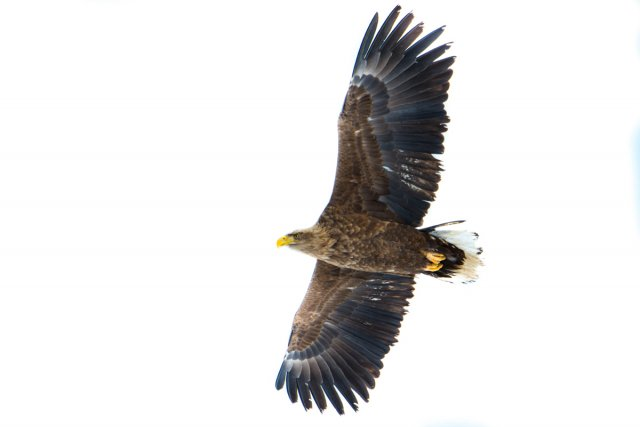 翔,在心中的自在天空上,揮動雙翼,盡情展翅。(123RF)
