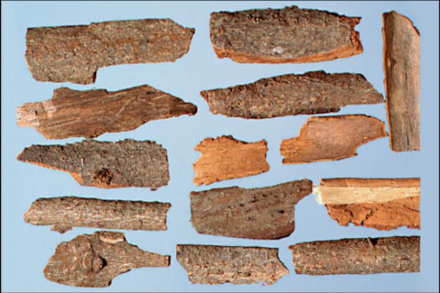 肉桂皮:桂枝條的皮。 (張賢哲教授《河洛藥典》提供)