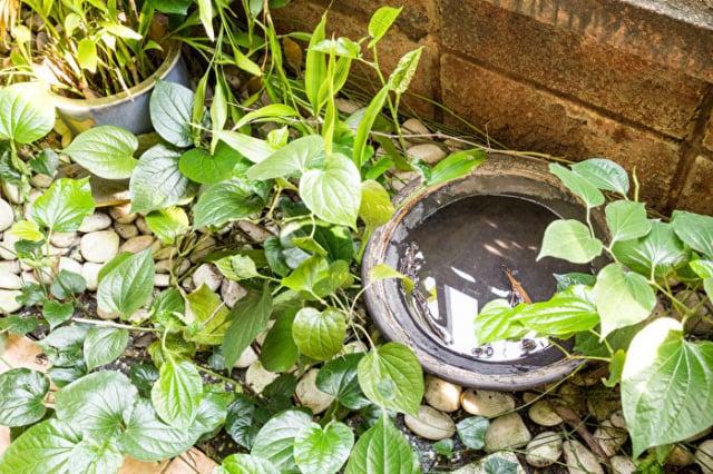 院子裡避免放置任何會積水的容器,它們是蚊子孳生的溫床。(Shutterstock)