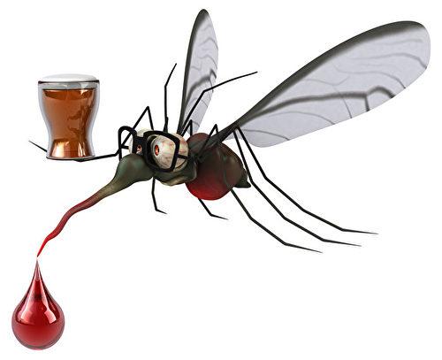 蚊子確實喜歡啤酒,喝酒過後,人體皮膚散發出來的味道,特別吸引蚊子。(Shutterstock)