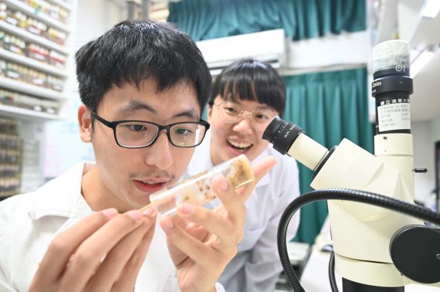 許多不正常增生的癌細胞為何會有比較大的細胞核?清華大學研究團隊透過研究果蠅細胞發現,細胞核內的DNA受損修復機制失效是關鍵。(清華大學提供)