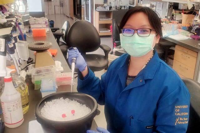 此次投稿期刊的第一作者張雅筑博士研究細胞核形態調控機制多年,目前在美國加州大學舊金山分校進行博士後研究,專攻神經科學領域。(清華大學提供)