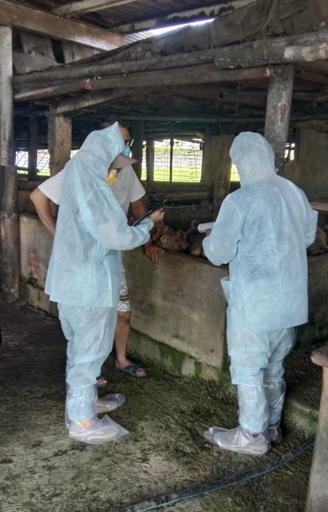 為杜絕非洲豬瘟傳播鏈,禁止用廚餘養豬一個月,宜蘭縣查獲礁溪某養豬場違規使用廚餘養豬,依法開罰至少8萬元。2