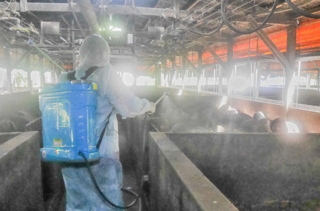 祥育畜牧場工作人員針對環境定期清消。