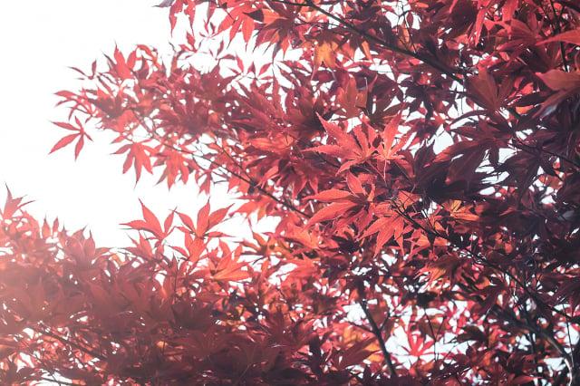 秋天來了,像淑女般愜意林野,像優美的文辭落在詩行,吟詠繽紛的季節。(123RF)